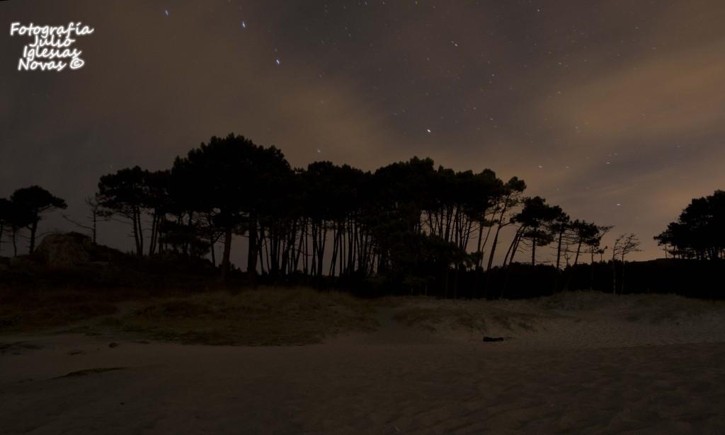 bosque y estrelas